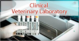 CLINICAL VETERINARY TESTING